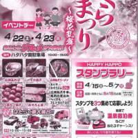 御所の台ふれあいパーク桜開花状況(H29.4.21)