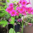 徐々に開花した3種類の草花