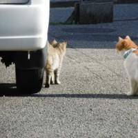 猫との出会い その123 愛媛県今治市では、首輪をした猫に続き、子猫と思われる猫が現れました