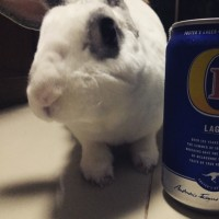 オーストラリアビール☆