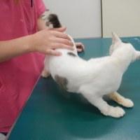 野良猫さんの、みーこちゃんワクチン済ませました。