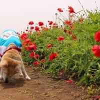 愛犬まるの大仕事の前日
