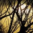 『モノと図解から探る 怪奇・妖怪の世界』『落日の豊臣政権: 秀吉の憂鬱、不穏な京都』『大和名所図会』他