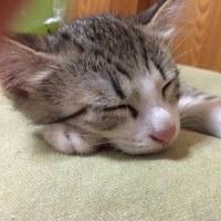 おやすみ しーろ
