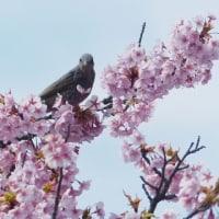 春の日差しをあびて、まだ少し低温ですけど、春期講習会。