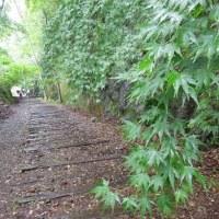 旧国鉄の廃線跡ハイキング 3「長尾山第1トンネル・お弁当」