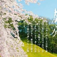 春の贈り物\(^o^)/