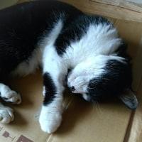 ハマる兄猫でおやすみ