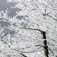 雪の芸術‥その2 (撮影旅行⑨)