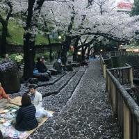 2017年東京の桜