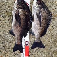 紀州釣りでの釣果