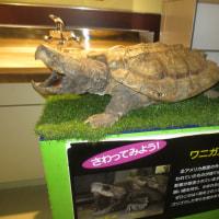 姫路水族館