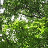 采配蘭に会いに初夏の雑木林を訪ねる@泉の森大和市