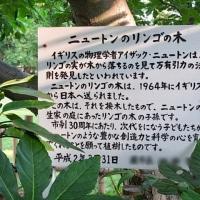 🍎ニュートンのリンゴの木🍎