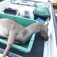 12月19日有害鳥獣捕獲「鹿」