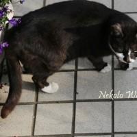 フウロ草と猫の笑顔