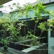 熊澤安子著 「木造住宅のつくり方」