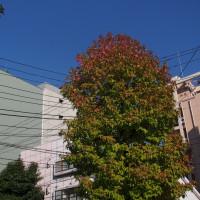 色ずく街路樹