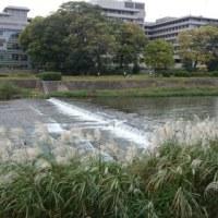 鳥取県の地震で京都も揺れました