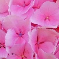 バラの花 満喫
