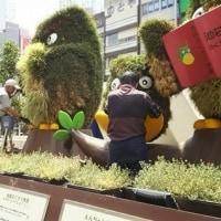 ●6/20 環境の緑化と美化報告 プランターに花植えとえんちゃんお腹にプラグ苗植え