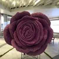 巨大なバラ