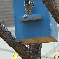 小鳥の巣箱2