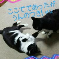 『はなくそギャングだん』(団員1名←今のところ)