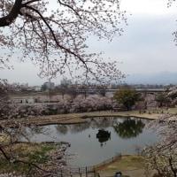 母の納骨式と桜