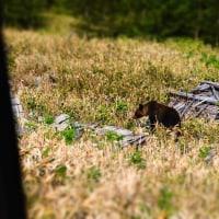 もし、、道路付近に熊がいても。