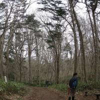 春を探して野幌森林公園