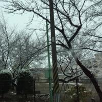 雪降り〜(。-_-。)