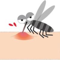 初夏?の蚊