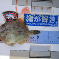 肝パンカワハギを狙って! 東京湾クルーズ釣行記