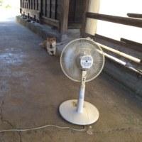 フェーン現象で 暑い暑いの新潟  (`´ )フーーー