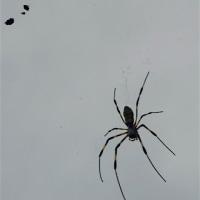曇り空に蜘蛛