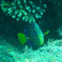 安満地の魚と甲殻類