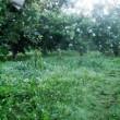 3回目の草刈り