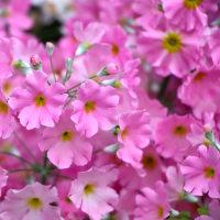 美花は心の癒し