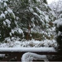 54年ぶりの 11月の雪
