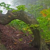 樹木が主役の写真ー13