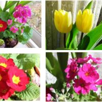 春の花「寄せ植え」