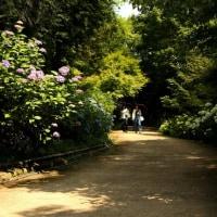 三景園花まつり