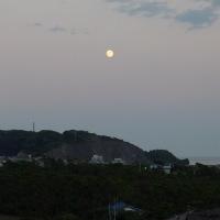 網代湾の名月