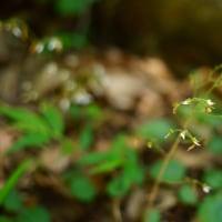 武蔵丘陵森林公園  EF 50mmF1.8Ⅱ+MC-11+α7RⅡ