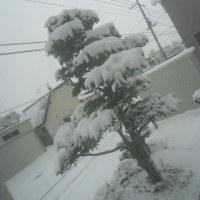 雪攻めはもう否よ嫌否