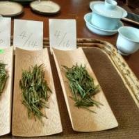 安吉白茶の里(*^^*)
