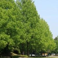 仙台市青葉区川内にある東北大学の川内キャンパスを散策しました