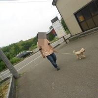 わんちゃんご紹介(6/12~6/18)