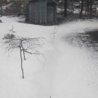 今日も雪だ!